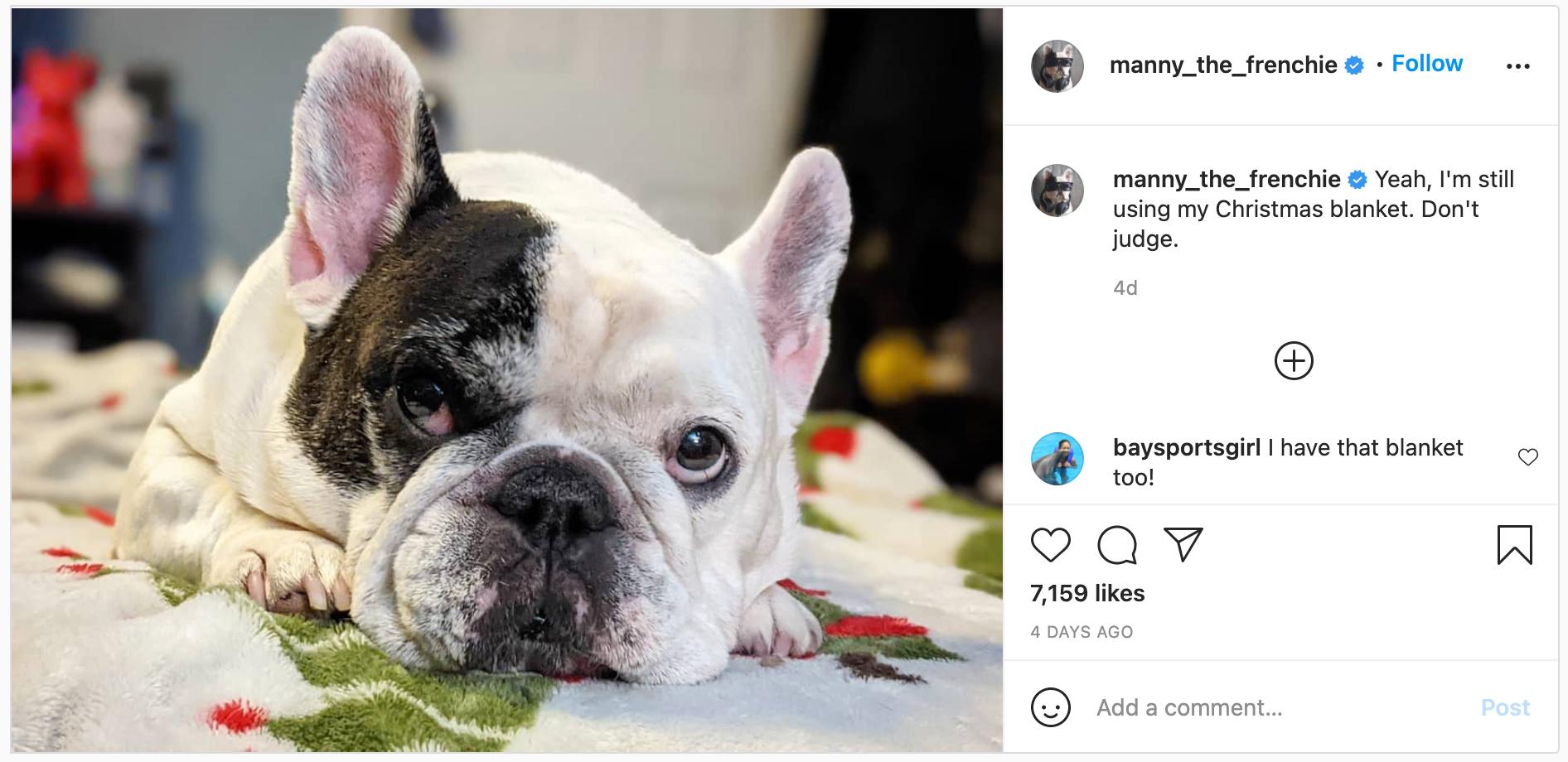 instagram dog influencer