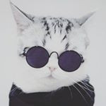 buy instagram account *********dkittycats